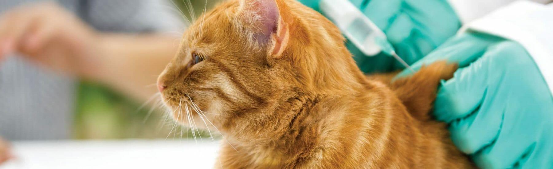 pet-vaccination