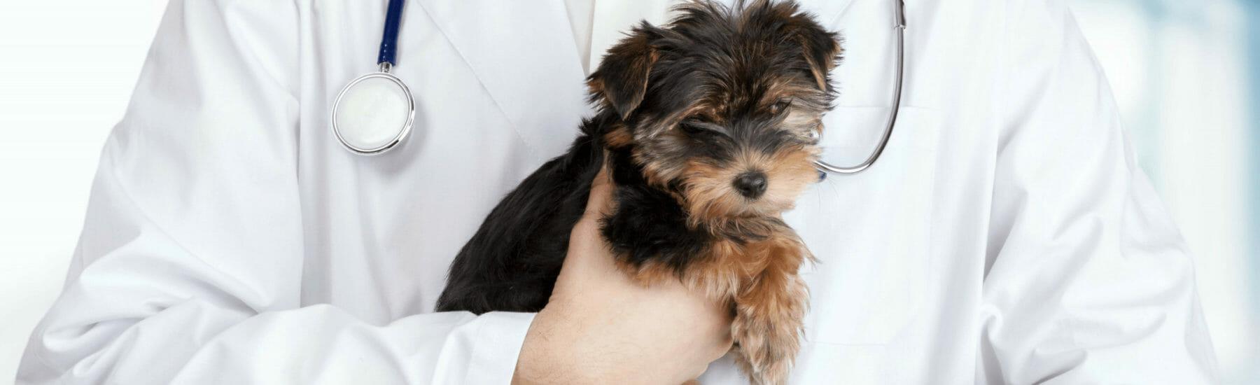dog-neutering